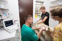 Veterinar Oradea